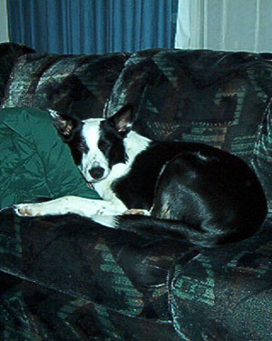I'm grateful for T'akaya the Brilliant Border Collie.  She really is a great family dog.
