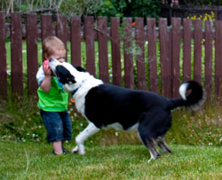 The Confusing Nature of Puppy and Toddler Behavior